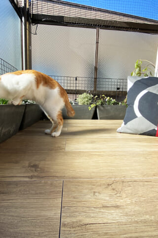 あけましておめでとうございます 猫とベランダとノルディスカティーゲル
